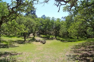 Site 3: Open space surrounded by trees.